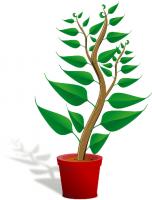 Продам саженцы малины, клубники, семена растений